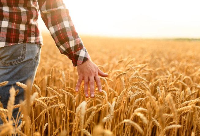 Фермерство: что нужно знать новичку