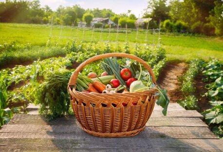 Как выбрать минитрактор для огорода